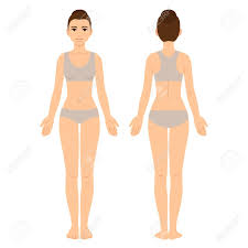 Body Chart Female Body Chart Front And Back View Young Woman In Underwear