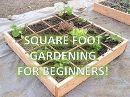 garden box square foot gardening