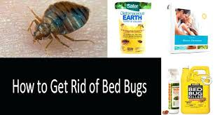 bed bug bully reviews. Harris Bed Bug Killer Reviews How To Kill Bugs Photo Spray . Bully