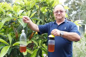 When To Spray Fruit Trees In NZ To Prevent Codling Moth Leaf Curl Homemade Spray For Fruit Trees