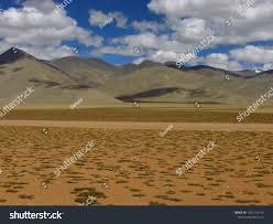 Barren Himalaya Mountain Landscape Ladakh India Stock Photo (Edit Now)  1201316155