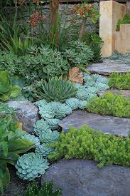 Small Picture 96 best Indigenous South African Garden images on Pinterest