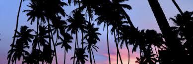 palm tree header Tumblr