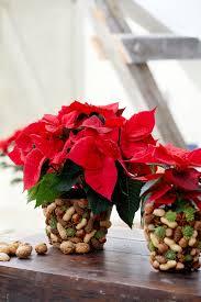 Eihnachtssterne Gehören Zum Advent Toughguysproductions