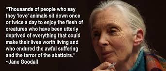 Jane Goodall Quotes Classy Jane Goodall Quotes Quotes Pinterest Jane Goodall And Famous