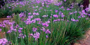 top 14 water wise plants for your garden