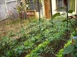 Small Picture Design A Vegetable Garden Online For Free The Garden Inspirations