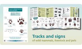 Fsc Mammals Tracks Signs Chart