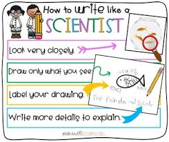 What Do Scientists Do Anchor Chart How To Write Like A Scientist Anchor Chart For Little Learners