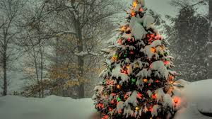 Christmas Tree In Nature - 1920x1080 ...