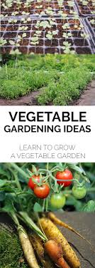 Home Vegetable Gardening: Support Your Tomatoes With These Ideas