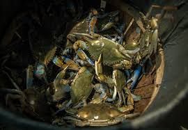 Md Crab Size Chart Crab Violations Are Plentiful In Maryland None More So Than