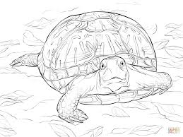 Good pics people coloring pages ideas the gorgeous point pertaining to colour is it can be as easy or maybe while. Realistic Ornate Box Turtle Coloring Pages Ninja Sheets Page Free Printable Bible Book Disney Art Golfrealestateonline