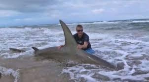 great hammerhead shark caught. Modren Hammerhead By Justin Hoffman On Great Hammerhead Shark Caught