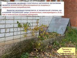 Презентация на тему Некоторые аспекты проблемы биоповреждений  7 Причинами заселения строительных материалов