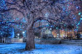 A tree near the national war memorial in Ottawa decorated with Christmas  lights