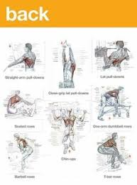 Biceps Exercise Chart 46 Best Back And Bicep Workout Images Workout Gym