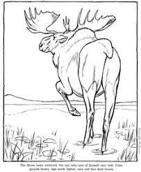 Small Picture Wild animal coloring page Cute baby kangaroo Coloring page