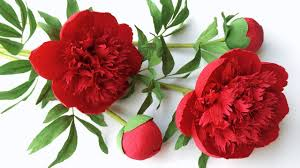 Peony Paper Flower Abc Tv How To Make Red Charm Peony Paper Flower From Crepe Paper Craft Tutorial