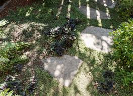 plants between pavers dollhouse fern matthew williams