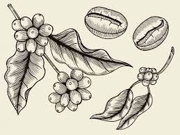 Available in store and online using code brewathome. 19 866 Coffee Plant Vectors Royalty Free Vector Coffee Plant Images Depositphotos