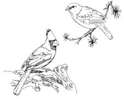 Small Picture Northern Cardinal coloring page Animals Town Animal color