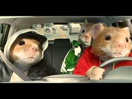 kia soul hamster 2015. 2010 kia soul hamster commercial black sheep hamsters video 2015 n