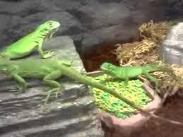 petco animals reptiles.  Reptiles YouTube Premium On Petco Animals Reptiles C
