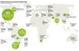 global map of genetically modified crops eat drink better