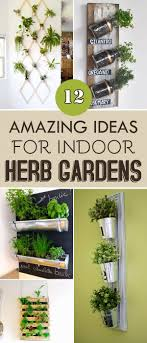 Herb Kitchen Garden Kit 1000 Ideas About Kitchen Herb Gardens On Pinterest Herb Garden
