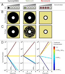 Epistasis Between Antibiotic Tolerance Persistence And Resistance