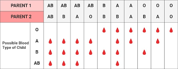 Parent And Child Blood Type Chart All Blood Group Chart Jalake