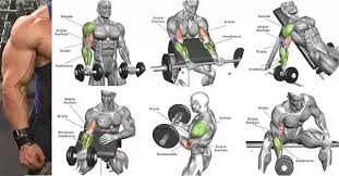 What Are Some Good Exercises To Sculpt Biceps Quora