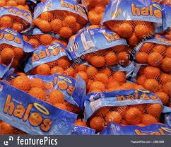 bags of halo mandarins fruit royalty free stock photo