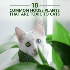 10-Common-House-Plants-That-Are-Toxic-to-