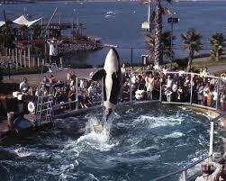 original shamu. Brilliant Shamu Original Poster Featuring The Photograph The Shamu Orca Sea World  San Diego 1967 By California With