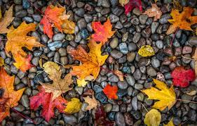 Autumn Wallpaper PC - KoLPaPer ...
