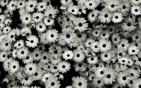 tumblr background black and white flowers. Black And White Flowers Tumblr Background On Dongetrabi