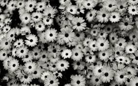 background image black and white. Beautiful Image Black And White Flowers Tumblr Background Inside Image