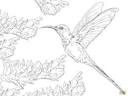 Small Picture Swallow Tail Hummingbird coloring page Free Printable Coloring Pages