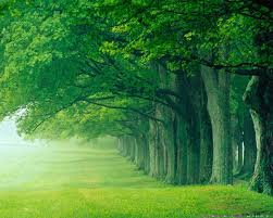 Beautiful Green Forest Background Gallery Yopriceville