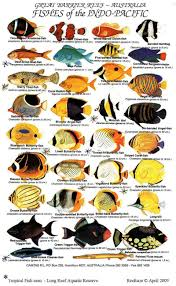 Clown Fish Identification Chart Saltwater Aquarium Fish Guide Saltwater Aquarium Fish