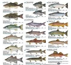 Freshwater Fish Identification Chart Freshwater Fish Species Freshwater Fish Fishing Chart