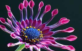 """Résultat de recherche d'images pour """"fleur"""""""