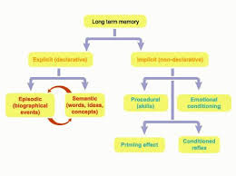 Long Term Memory Chart This Diagram Shows The Set Up Of Long Term Memory And How It