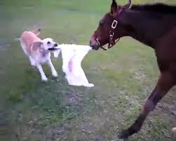 baby horses playing. Beautiful Baby Baby Horse And Dog Playing On Horses S