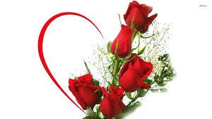 Kết quả hình ảnh cho hình ảnh hoa hồng