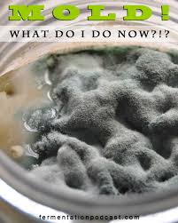 five questions on mold and food safety the fermentation podcast mold what do i do now