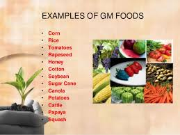 genetically modified food examples genetically modified food examples photo 10