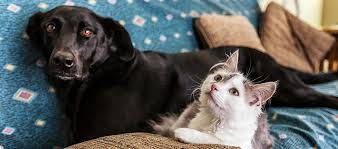 Advantage Dosage Chart For Cats Advocate Vs Advantage What Are The Differences